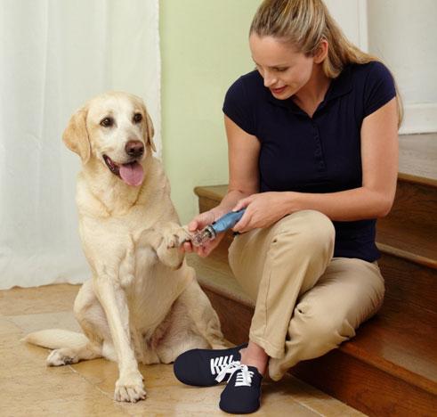 krallenschneider extra f r hund und katze sind ein muss tier tv. Black Bedroom Furniture Sets. Home Design Ideas