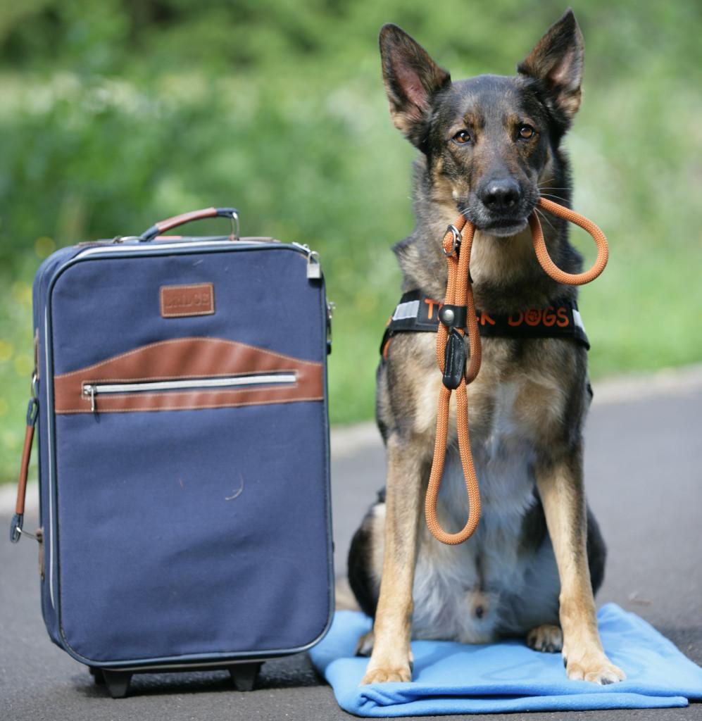 Ratgeber Hundezubehör