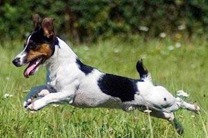 Hund-entlaufen300x200