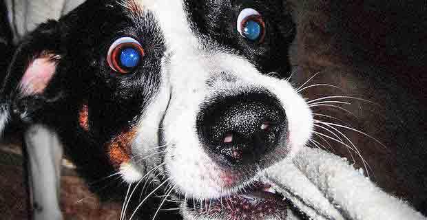 HundeSchaeden620x320