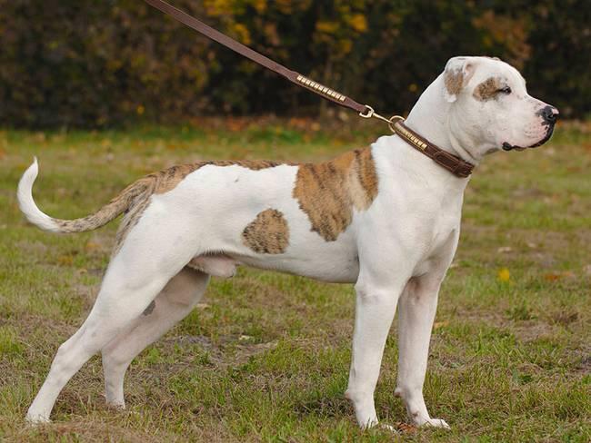 gefaehrliche-listenhunde