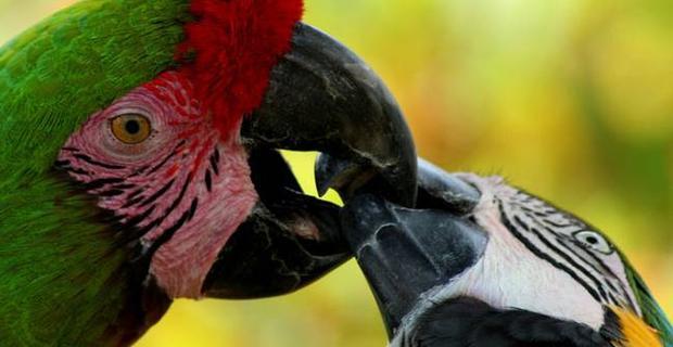 papageien-sind-feinschmecker620x320