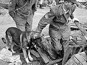 Rettungshundeausbildung 1961