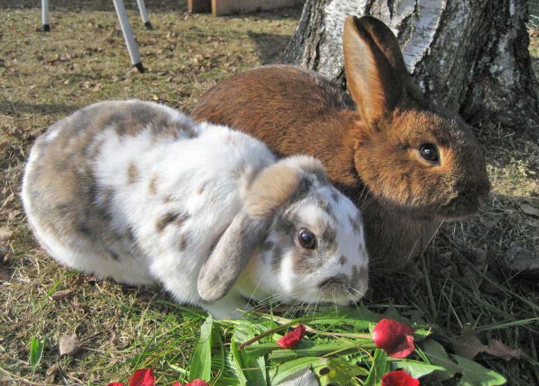KaninchenArtgerechtHalten