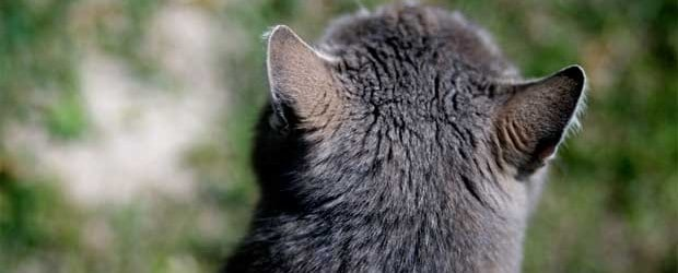 Alternde Katzen hoeren schlecht