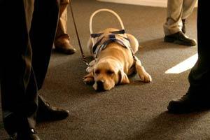 blindenhunde-helfen300x200
