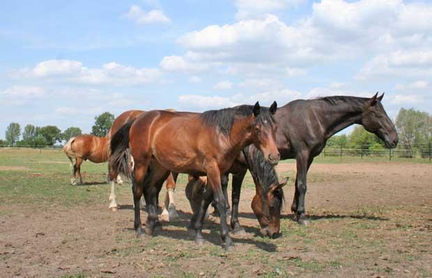 Pferde-ttv620x400