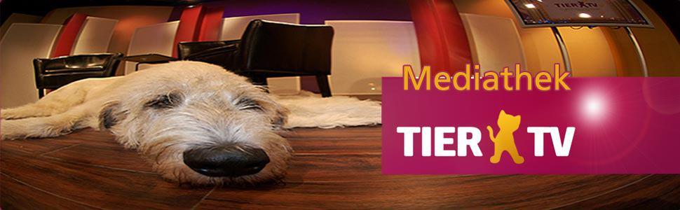 Mediathek-Grafik2