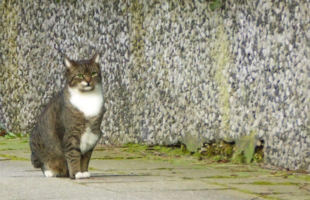 """Ist Ihre Katze """"frühlingsfit""""?"""