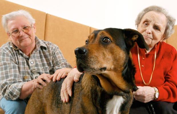 Senioren-Hund620x400