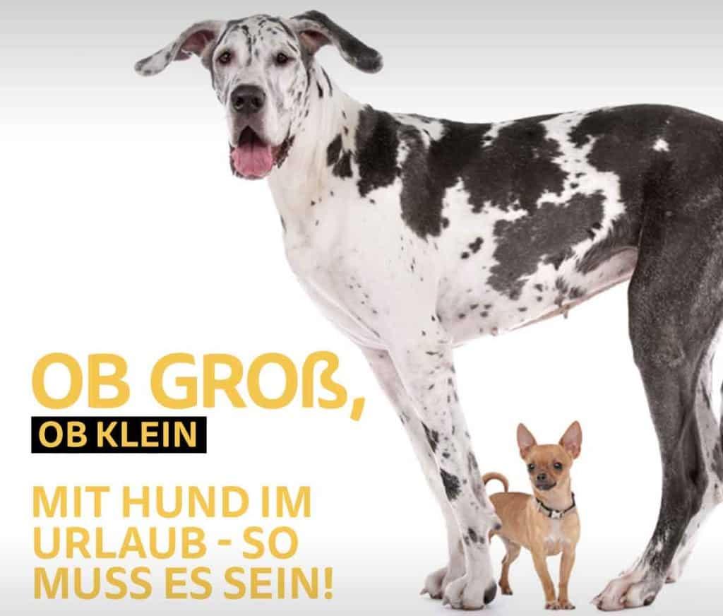 Hund-mit-Koffer.de