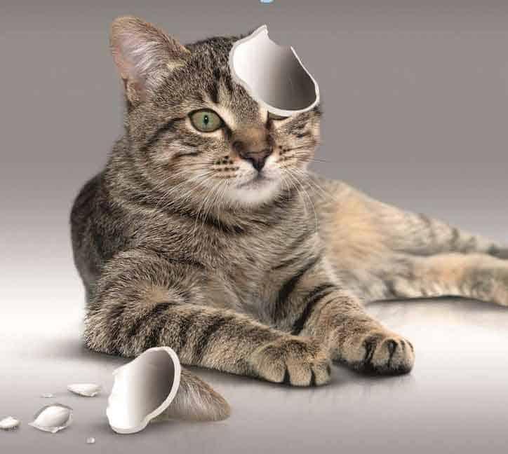 Katzenkastration - © Deutschen Tierschutzbundes e.V.