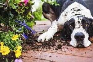 Tipps Gegen Zecken Im Eigenen Garten Tiertv