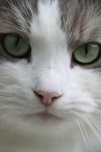 Portrait Katze © VIER PFOTEN Elisabeth Blum