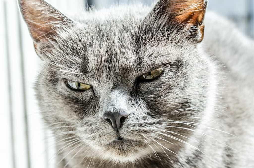Katze Plötzlich Aggressiv Vier Pfoten Gibt Tipps Tiertv